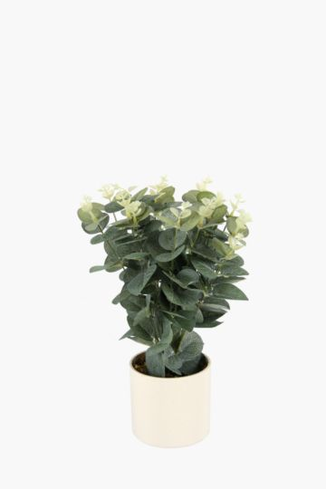 Gum Leaf Bush Potted Plant