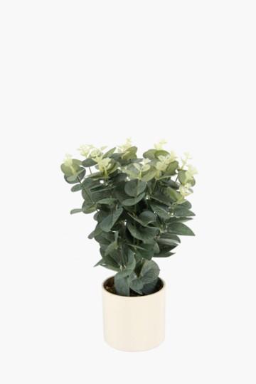 Gum Leaf Bush Potted Plant