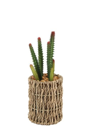 Seagrass Pot With A Cactus