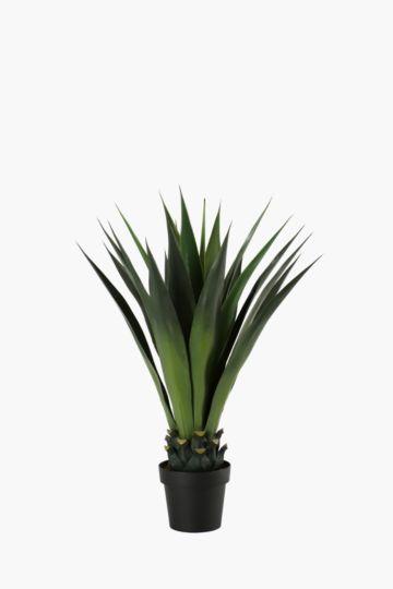 Giant Spike Aloe Potted Extra Large