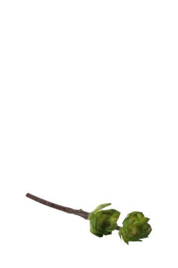 Succulent Rock Rose Single Stem