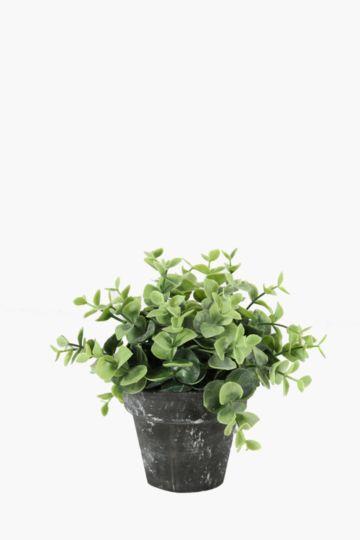 Gum Leaf In Slate Pot