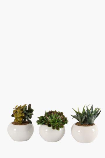 Assorted Mini Succulents