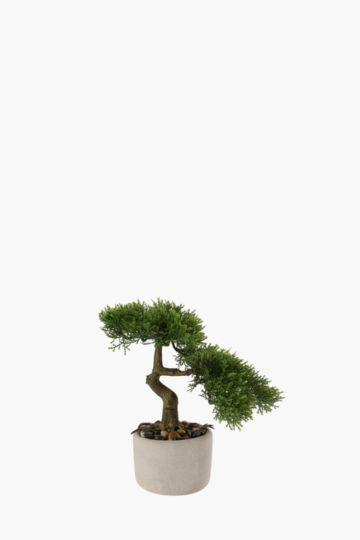 Bonsai Tree In Cement Pot Small