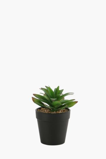 Everyday Potted Aloe
