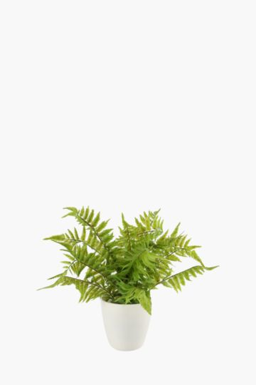 Fern In Plastic Pot