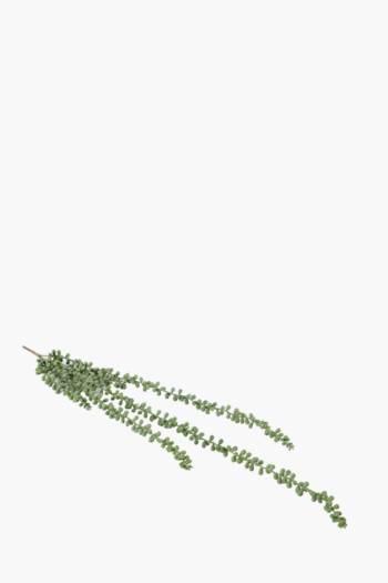 Donkey Tail Succulent Stem