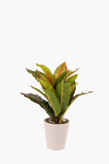 Tropical Leaves In Pot