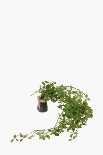 Hanging Greenery In Glass Bottle