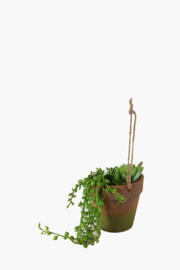 Hanging Succulent Potted
