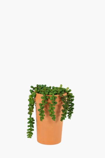 Trailing Succulent Potted