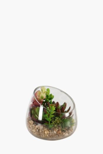 Tropical Succulent In Glass Pot