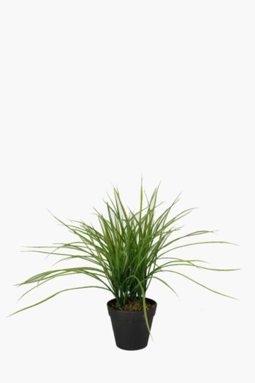Grass Potted
