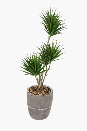 Mini Yucca Tree