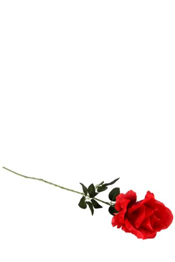 Elegant Rose Single Stem