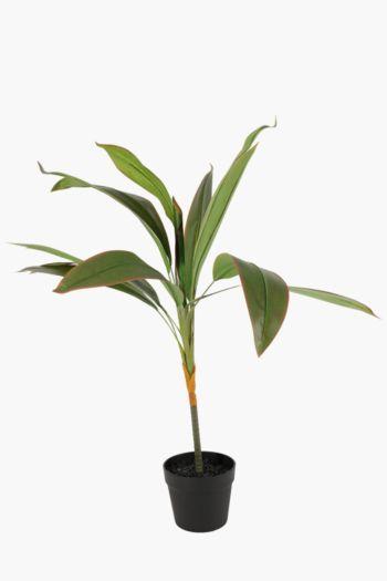 Long Leaf In Plastic Pot