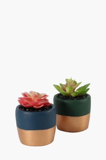 Assorted Mini Metallic Succulent
