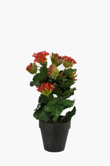 Flower In Slate Pot