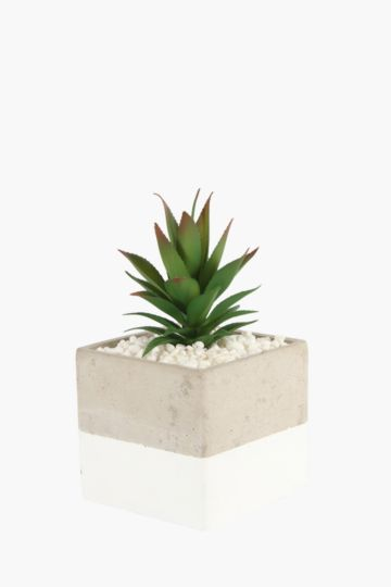 Agave In 2 Tone Stone Pot