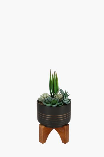Succulents On Wooden Stand