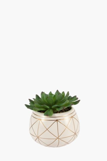 Succulent In Metallic Pot