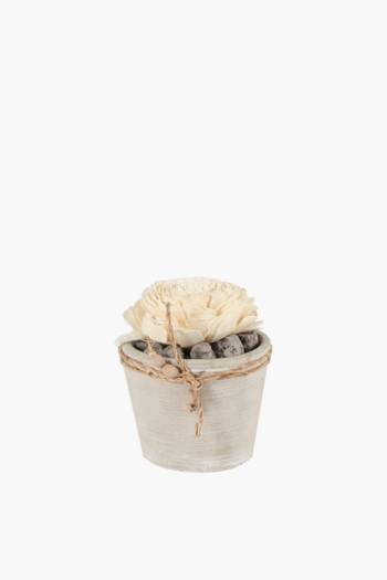 Potted Single Dry Flower Large