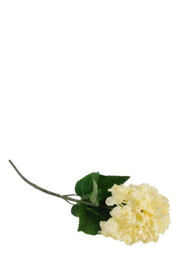 Hydrangea Flower Single Stem