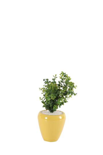 Money Tree In Ceramic Pot