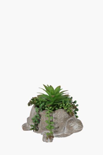 Succulent In Tortoise Pot