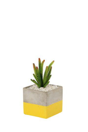 Cactus In 2 Tone Square Pot