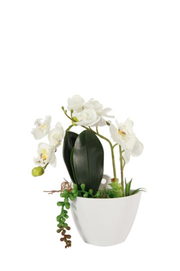 Wall Hanging Orchid In Pot