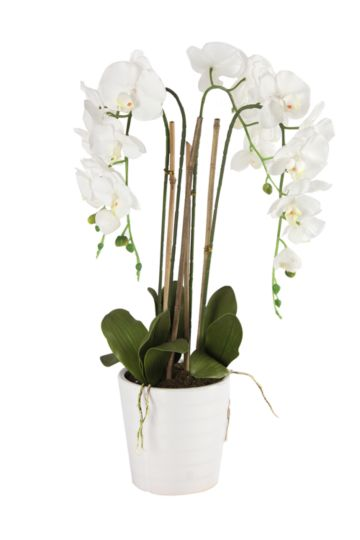 Real Touch Orchid Potted Large