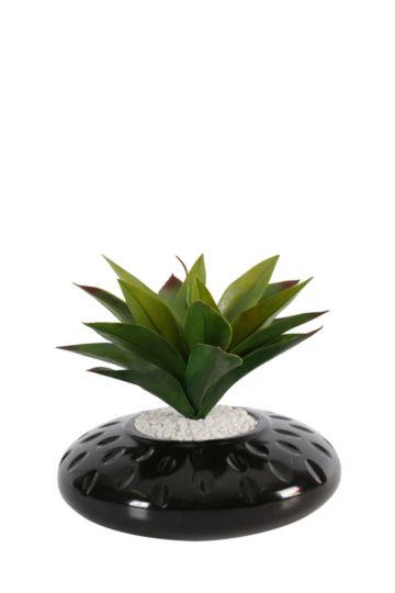 Agave In Flat Etch Pot