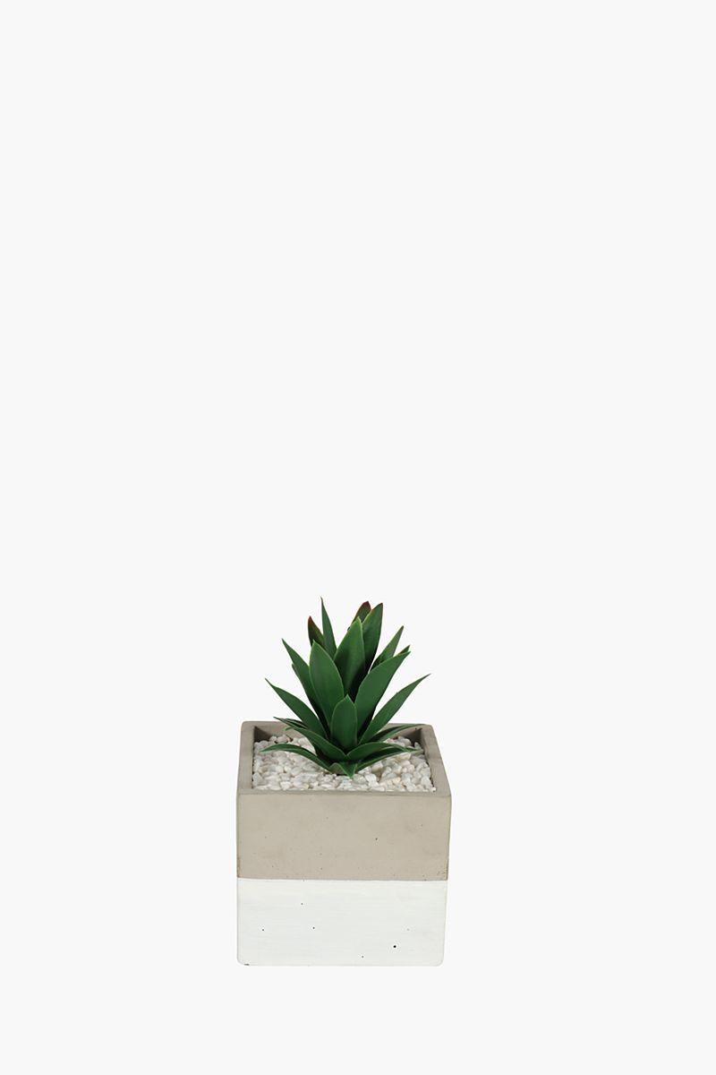 Agave In 2 Tone Ceramic Pot - Decorative Plants & Artificial Flowe