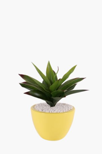 Agave In Ceramic Pot