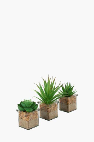 Assorted Mini Succulent