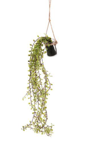 Hanging Vine In Glass Bottle