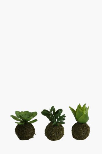 Assorted Mini Succulent