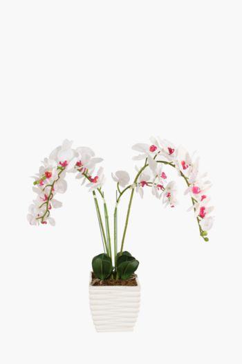 5 Stem Orchid In Large Pot