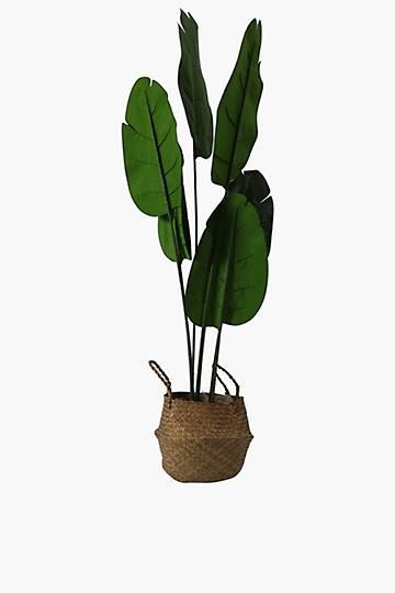 Banana Tree In Basket