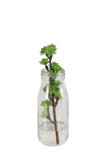 Glass Bottle With Succulent