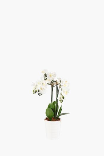 Orchid In Large Pot