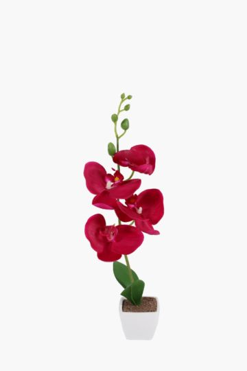 Mini Orchid In Plastic Pot