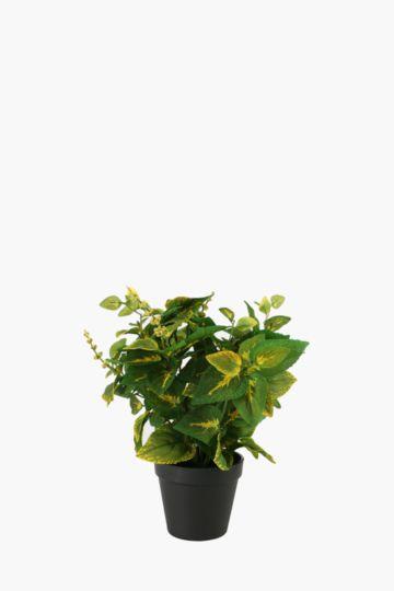 Varigated Bush Pot