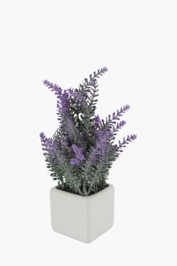 Lavender In A Square Pot