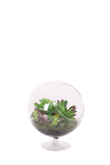 Multi Succulent In Glass Footed Vase