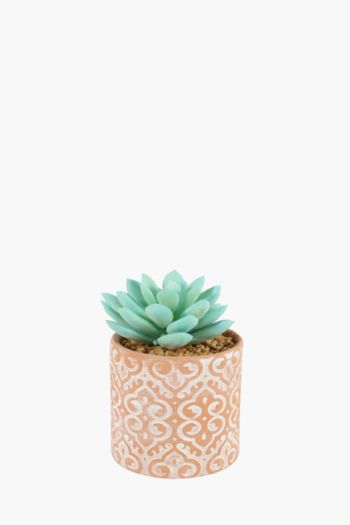 Succulent In Terracotta Pot