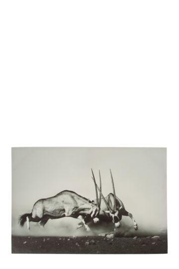 Springbok 60x90cm Wall Art