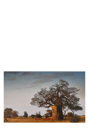 Art Print Baobab 94x60cm