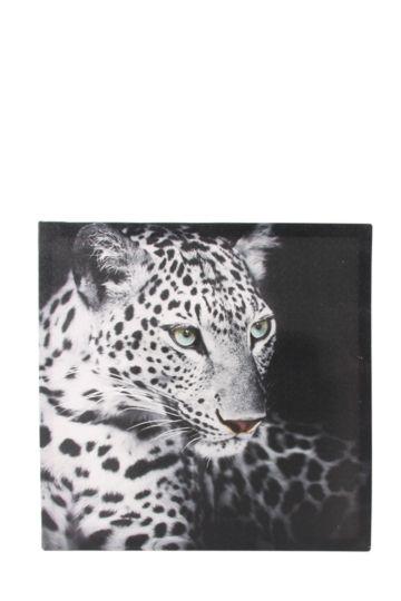 Leopard Stare 40x40cm Wall Art